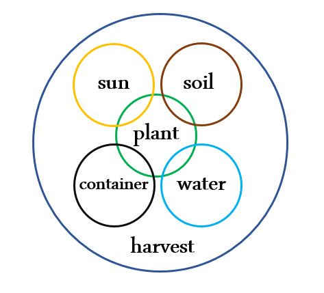 Plant Sun Soil Diagram 2016
